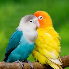 Two Love Birds